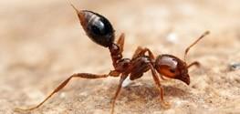 مورچه ها هم توالت عمومی دارند
