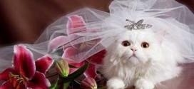 1429048580281 272x125 - تصاویر جالب از جشن عروسی حیوانات