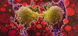 میوه هایی که برای جلوگیری و درمان سرطان مفید هستند