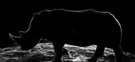 1434149725531 272x125 - تصاویر عکاسی از حیوانات در شب