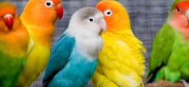 146108665829028 272x125 - تصاویری زیبا از پرندگان رنگارنگ