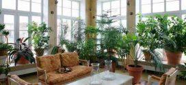 148554612063741 272x125 - گیاهان خانگی برای تصفیه هوای خانه