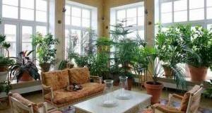 گیاهان خانگی برای تصفیه هوای خانه