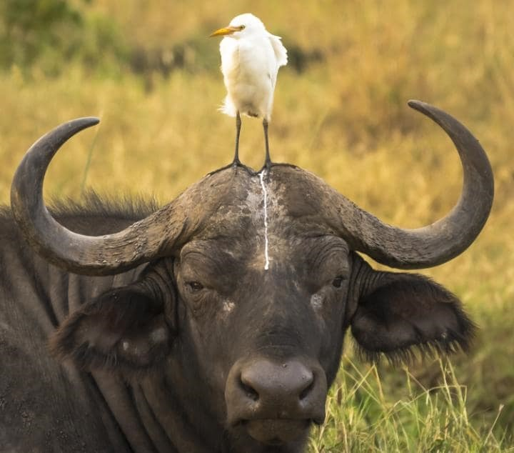 اخبار گوناگون,خبرهای گوناگون,  بامزهترین حیوانات
