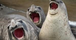 تصاویر بامزه از حیوانات