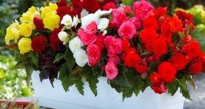 آشنایی با گلهای اپارتمانی زیبا