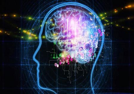 اخبار,اخبار علمی ,مغز انسان