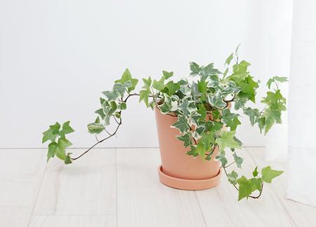 درباره گیاهان آپارتمانی,آشنایی با گیاهان آپارتمانی