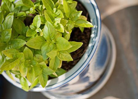 شناخت گیاهان آپارتمانی,تصفیه خانه با گیاهان آپارتمانی