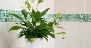 گیاهان اپارتمانی روحیه بخش