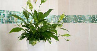 soothing1 herbs5 310x165 - گیاهان اپارتمانی روحیه بخش