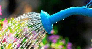 store2 garden1 310x165 - روش های صحیح نگهداری از باغچه