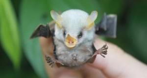 تصاویری جالب از خفاشها