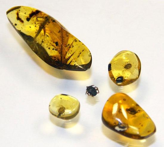 کشف «خون آشام» باستانی در سنگ کهربا