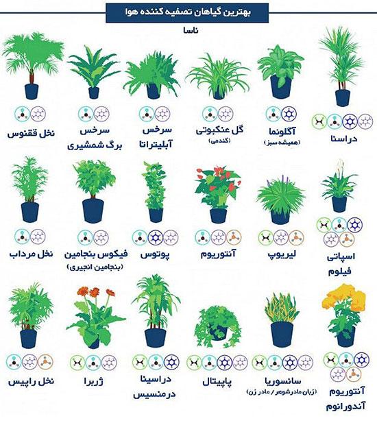 1517085 115 - گیاهان اپارتمانی برای تصفیه هوای خانه