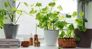 Best houseplants  310x165 - گیاهان مناسب حمام اتاق خواب و نشیمن
