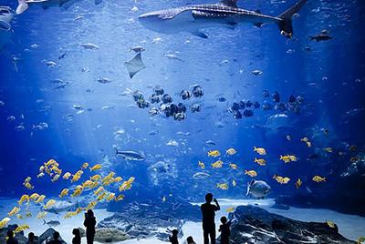 aquarium 01 - بزرگترین آکواریوم های جهان