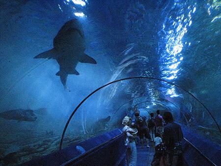 aquarium 02 - بزرگترین آکواریوم های جهان