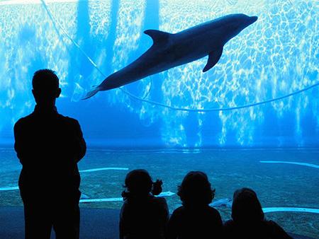 aquarium 03 - بزرگترین آکواریوم های جهان