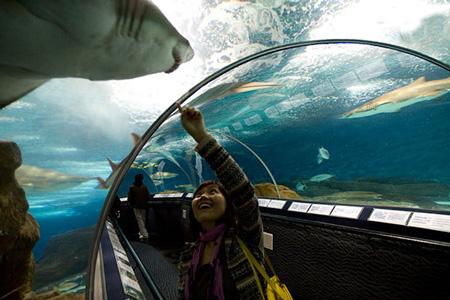 aquarium 04 - بزرگترین آکواریوم های جهان
