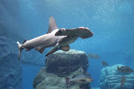 aquarium 05 - بزرگترین آکواریوم های جهان