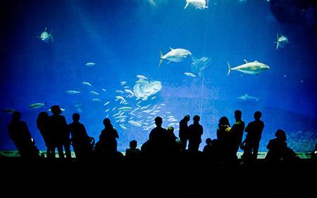 آکواریوم,بزرگترین آکواریوم,عکس های بزرگترین آکواریومهای جهان