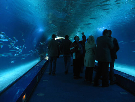 aquarium 08 - بزرگترین آکواریوم های جهان