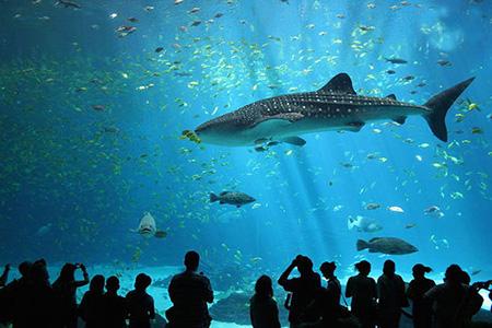 aquarium 11 - بزرگترین آکواریوم های جهان