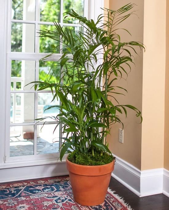 15 گیاه آپارتمانی معجزه گر که خواب شبانه را بهبود میبخشند