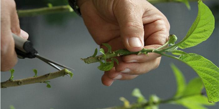 قلمه زدن گیاهان