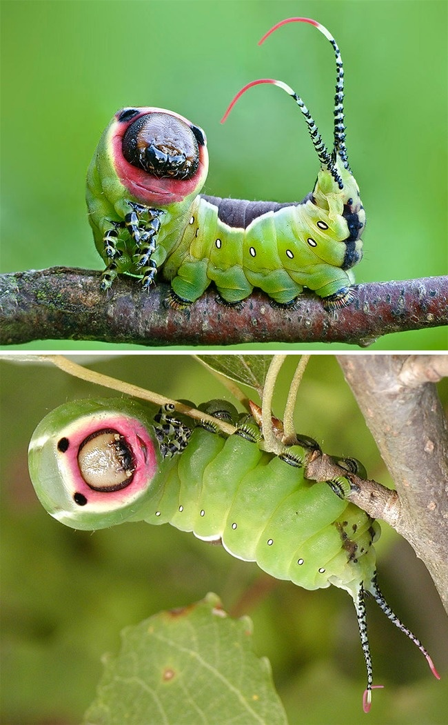 زیباترین حشرات زنده دنیا