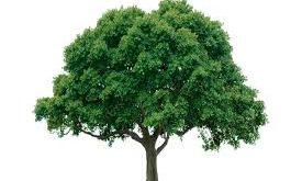 images 275x165 - درختان نبض دارند شبها میخوابن و حرکت میکنن
