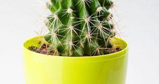 plants2 every2 month1 310x165 - گیاهان خانگی مناسب با شخصیت ماه متولد