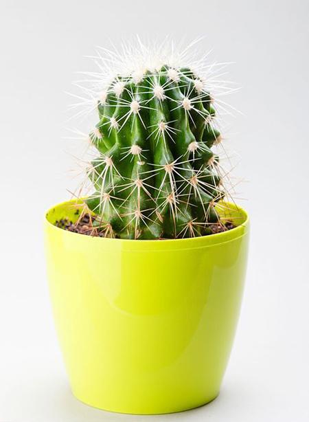 گیاهان متناسب با شخصیت افراد, گل های مناسب با شخصیت افراد متولدین هر ماه