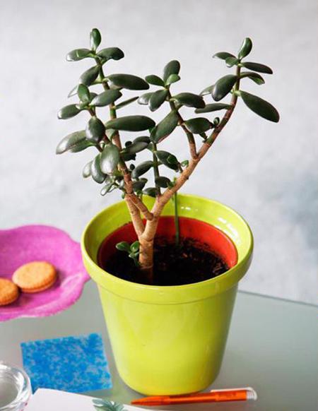 گیاهان متولدین هر ماه,گیاهان مناسب متولدین هر ماه