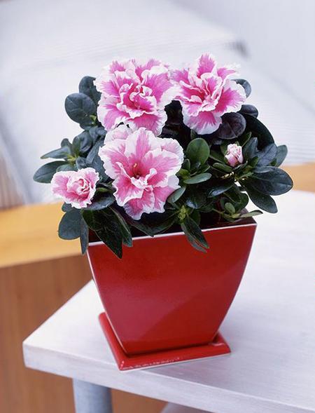 گیاهان مناسب متولدین هر ماه,گیاهان متناسب با شخصیت افراد