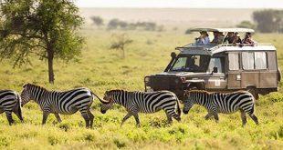 safari tour information24 310x165 - سافاری چیست؟ تاریخچه سافاری