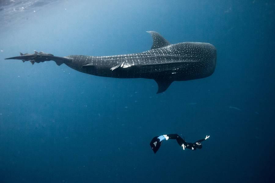 5bda05a6da38f diving 12 - تصاویر دلفین ها، کوسه ها و نهنگ ها در اقیانوس