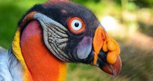birds 1 600x400 310x165 - پرنده هایی با قیافه های عجیب و افسانه ای