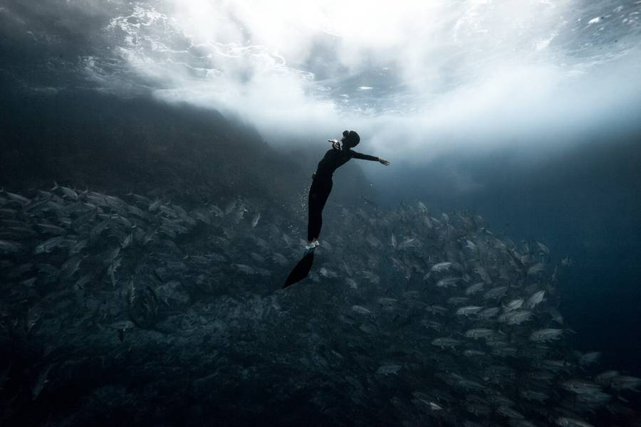 diving 13 - تصاویر دلفین ها، کوسه ها و نهنگ ها در اقیانوس