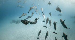 diving 14 2 310x165 - تصاویر دلفین ها، کوسه ها و نهنگ ها در اقیانوس