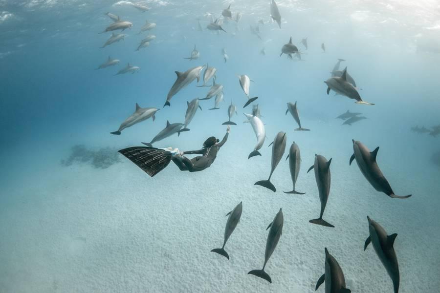 diving 14 - تصاویر دلفین ها، کوسه ها و نهنگ ها در اقیانوس
