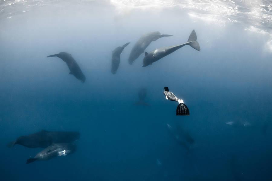 diving 15 - تصاویر دلفین ها، کوسه ها و نهنگ ها در اقیانوس