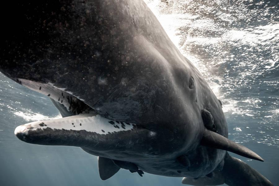 diving 16 - تصاویر دلفین ها، کوسه ها و نهنگ ها در اقیانوس