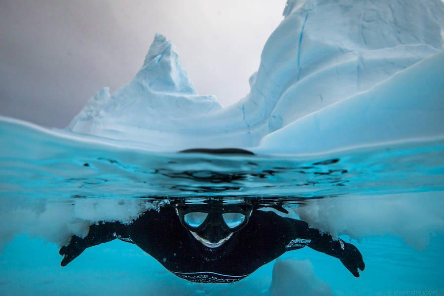 diving 18 - تصاویر دلفین ها، کوسه ها و نهنگ ها در اقیانوس