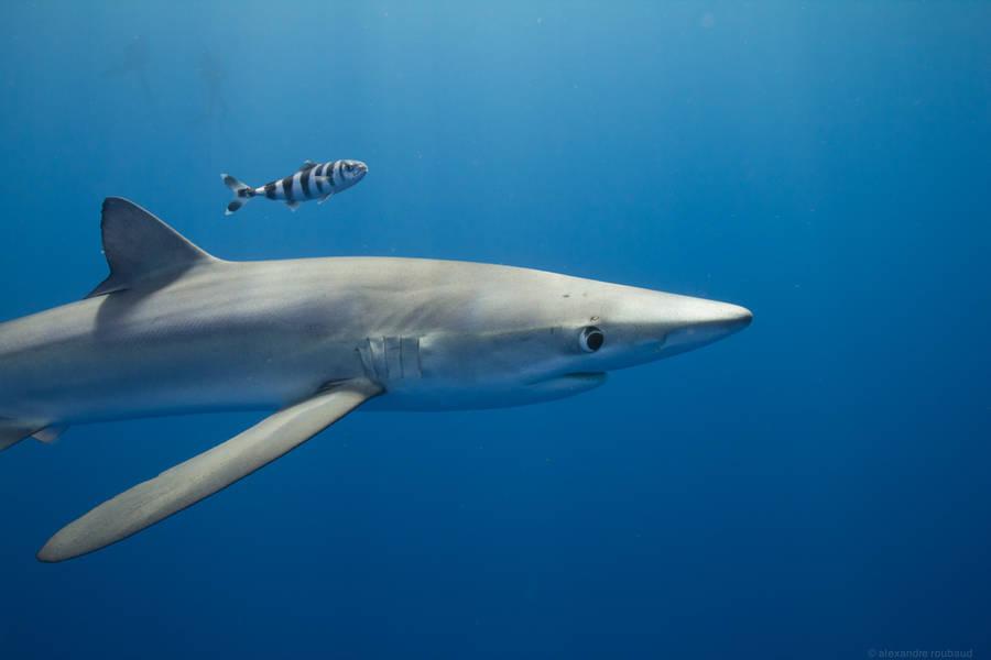 diving 3 - تصاویر دلفین ها، کوسه ها و نهنگ ها در اقیانوس