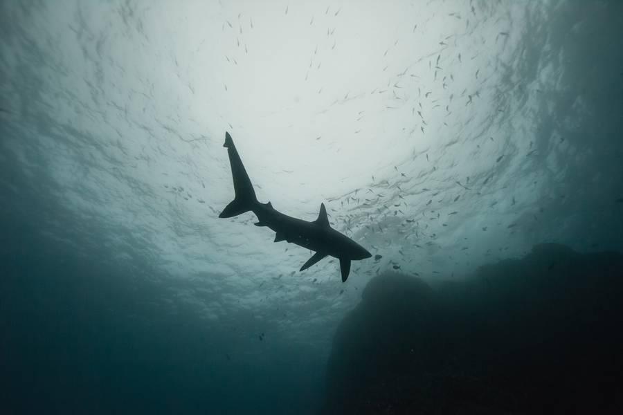 diving 9 - تصاویر دلفین ها، کوسه ها و نهنگ ها در اقیانوس