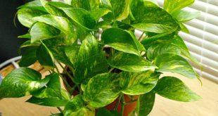 maintenance2 apartment1 flowers1 310x165 - روشهای صحیح نگهداری از گیاهان در اپارتمان