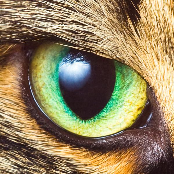 حیوانات دنیا را چگونه می بینند؟