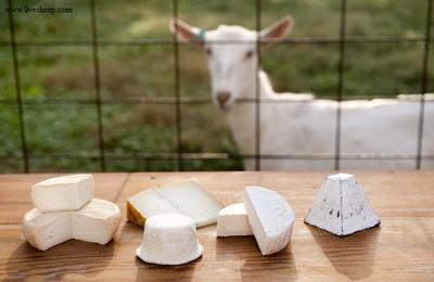 مزایای پنیر بز, مقایسه پنیر گاوی با پنیر بز